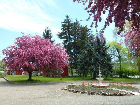 Vernon, Canadá: trees