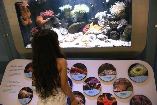 Canadian Museum of Nature: fishtank