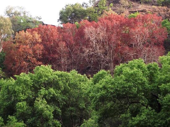 Mahadeo Temple: The jungles side of Gupt Mahadeo