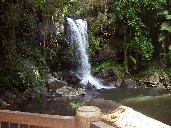 Tamborine Mountain Tours: Curtis Falls