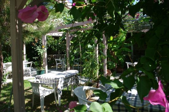 Jerry's Elliniko: Beautiful Colorful Garden Setting