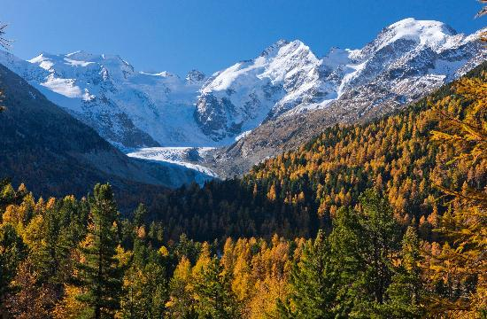 Engadin St. Moritz, Sveits: Golden automn in the Engadin with Morteratsch Glacier
