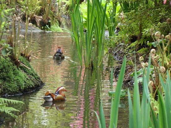 Richmond-upon-Thames, UK: Mandarin Ducks in the Still Pond