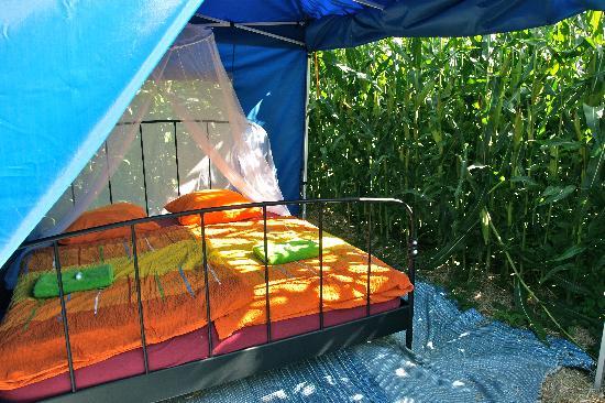Ferme de la Corbière : la chambre dans le maïs