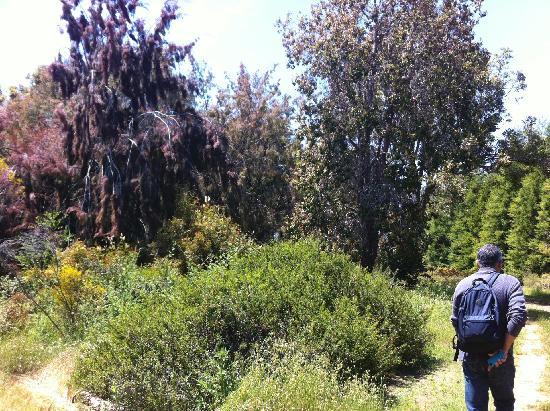 UCSC Arboretum: nice day at the arboretum