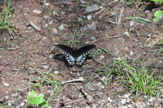 RoundStone Camping Resort: beautiful butterflies