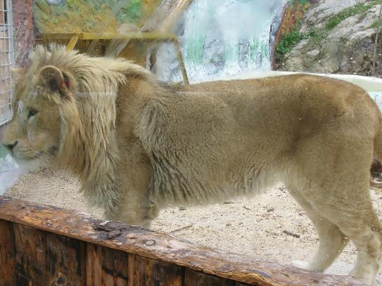 Zoo Fauverie du Faron