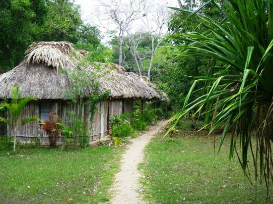 Thatch-roofed cabanas just off the Mopan River (41696399)