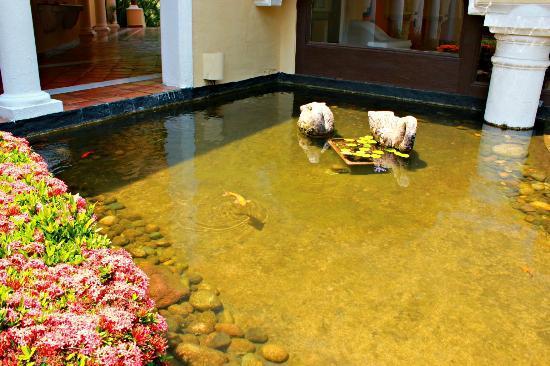 El estanque con peces fotograf a de casa velas puerto for Estanque para patos y peces