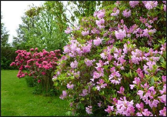 Harrison Hammond House: Blossom Spring