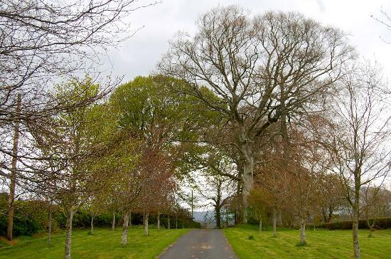 Barraderry Country House: Driveway to house