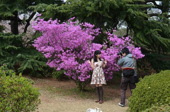 Shinjuku Gyoen National Garden: Shinjuku during Sakura time