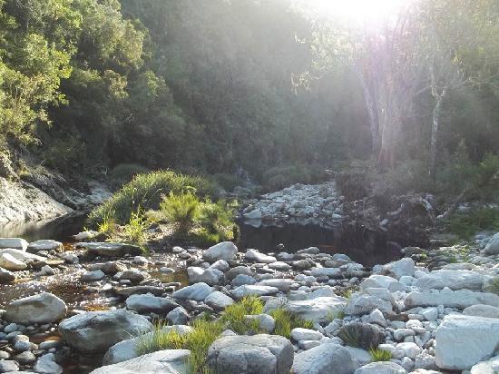 Teniqua Treetops: river