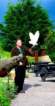 Talon Falconry