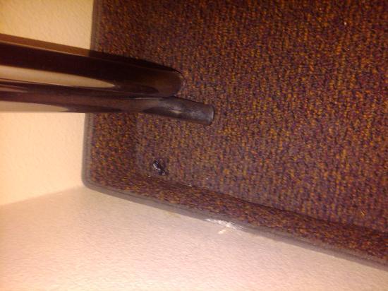 BEST WESTERN PLUS Graham Inn: dead bugs in the room