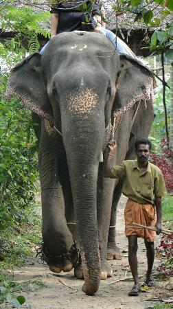 Spice Village: Elephant ride in town