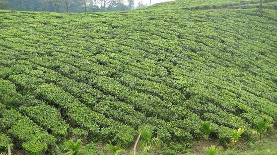 Spice Village: Tea Plantations en-route
