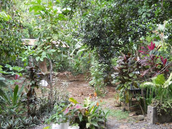 Cabinas Carol: Gardens