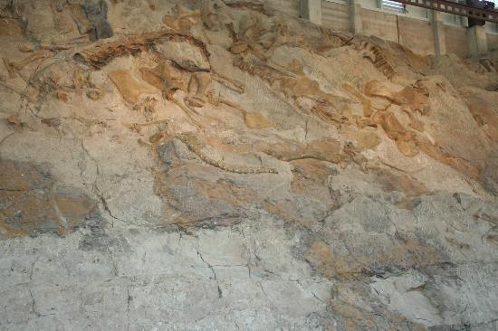 Dinosaur Quarry