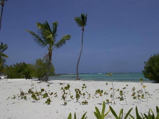 Tortuga Bay, Puntacana Resort & Club: Beach photo