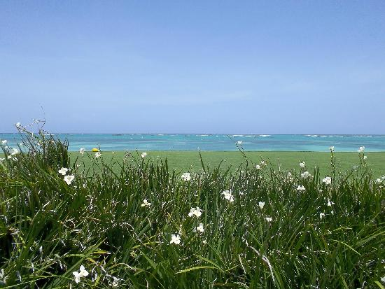 Tortuga Bay, Puntacana Resort & Club: More flowers --- at the fifth T