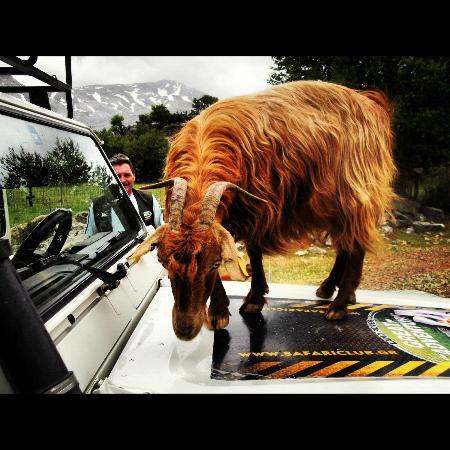 Safari Club Crete: if goats climb trees, why not jeeps?