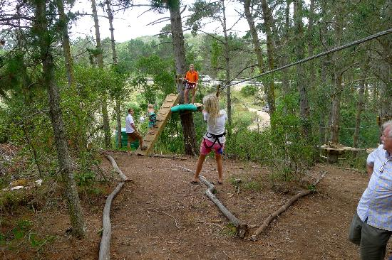 Zipline In Kids Obstacle Course In Trees Picture Of