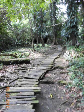 Congo Bongo Ecolodges Costa Rica: Path to th beach (My Wife's Hell)