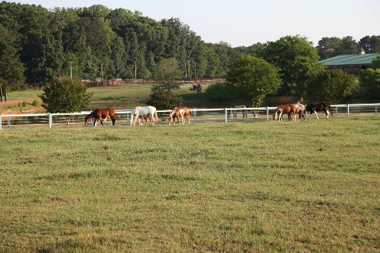 Southern Cross Ranch: Horses in the pasture.