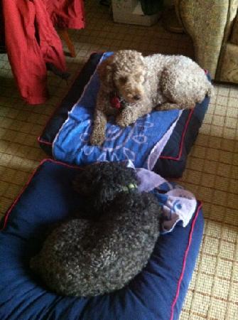 Sheraton Suites Calgary Eau Claire: Comfy beds!
