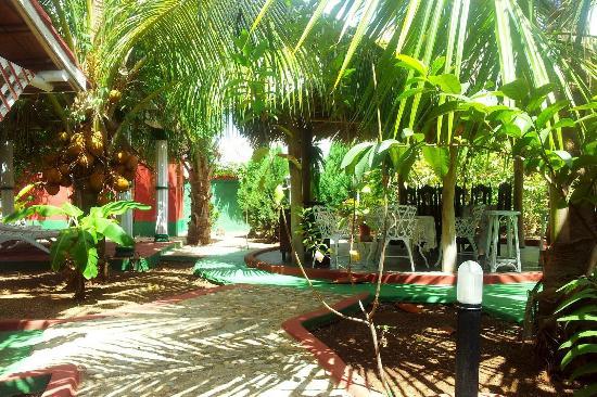 Hostal Casa La Curva: Garden