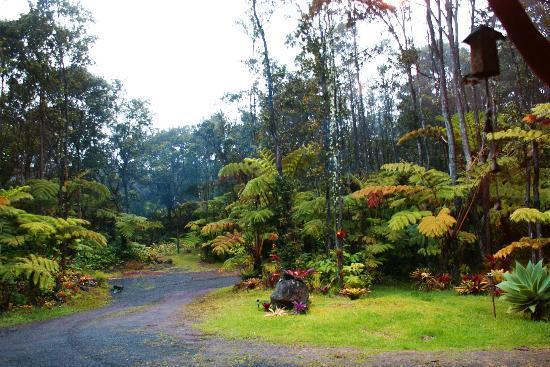 Aloha Crater Lodge: misty