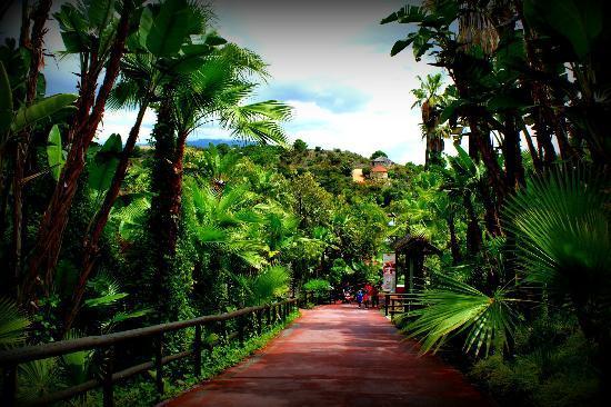 La Orquidea: Selwo, Estepona