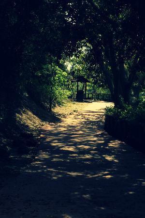 La Orquidea: Estepona