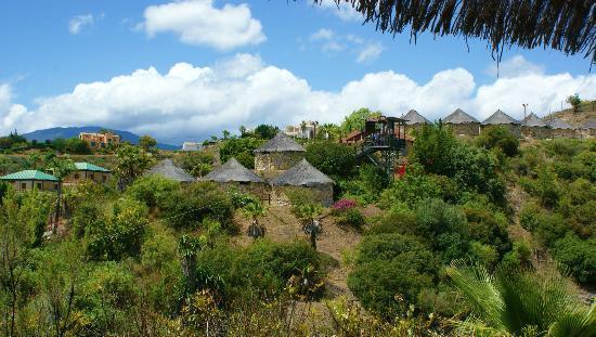 La Orquidea: Selwo