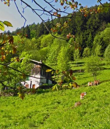 B&B Il Sorriso dei Nonni: Vall med kor några hundra meter norr om B&B.