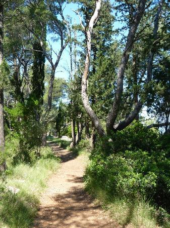 SENTIDO Kaktus Resort : petit bois le long de la plage