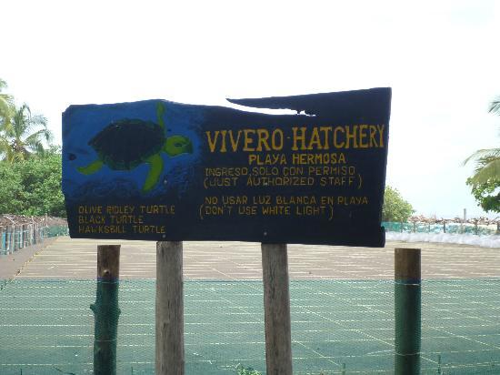 Playa Hermosa, Costa Rica: Hatchery Signage