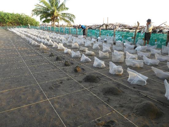 Playa Hermosa Wildlife Refuge: Hatchery has run out of materials for nests (Sept 2011)