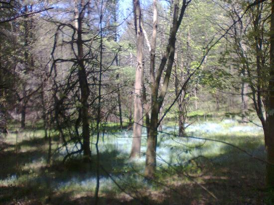 The Bruce Trail: along the 'Bruce Trail'