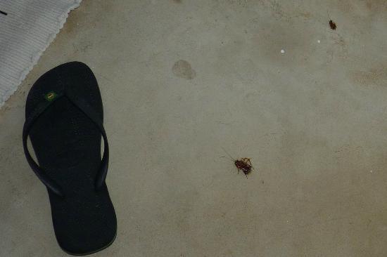 Posada Caracol: Cucarachas en la habitación