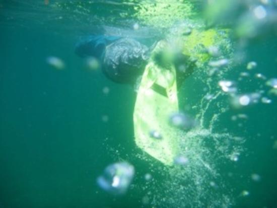 Aventuras Tropicales Golfo Dulce: Snorkeling in Golfo Dulce