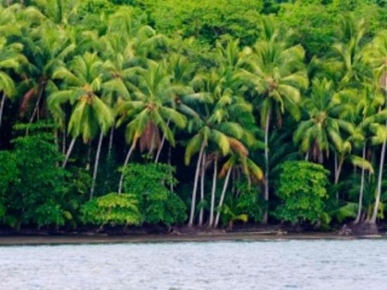 Aventuras Tropicales Golfo Dulce: jungle down to the shoreline