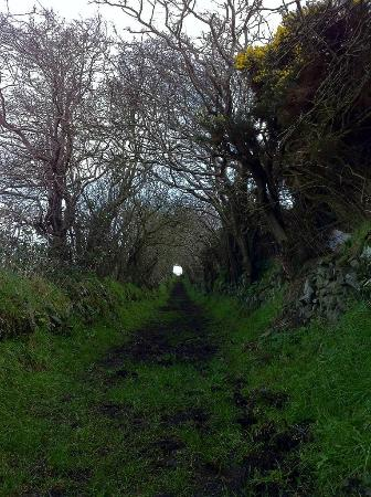 This is the path to Ballynoe stone circle in winter. A site to see on its own!