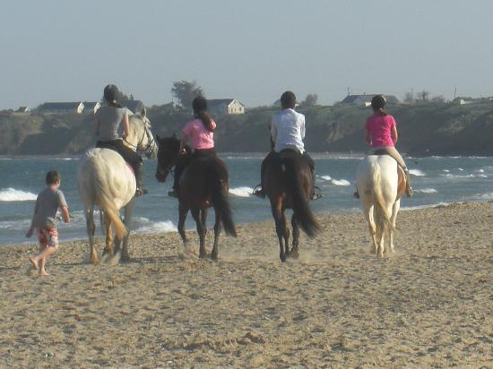 Seaview Bed & Breakfast: Beach Trecking from our Equestrian Centre