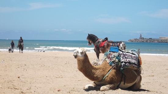 Essaouira Beach : riding options