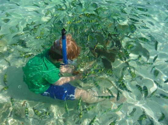Coral Island: More fish