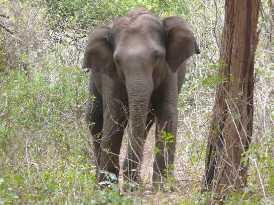 Chinnar Wildlife Sanctuary: The female elephant at 10 feet from us!