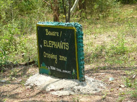 Chinnar Wildlife Sanctuary: We kept our eyes peeled
