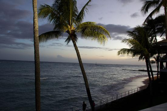 Halekulani Hotel: View from La Mer (Orchids during renovations)
